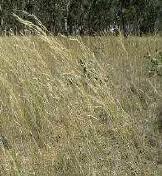 external image Grass%20View_b.jpg