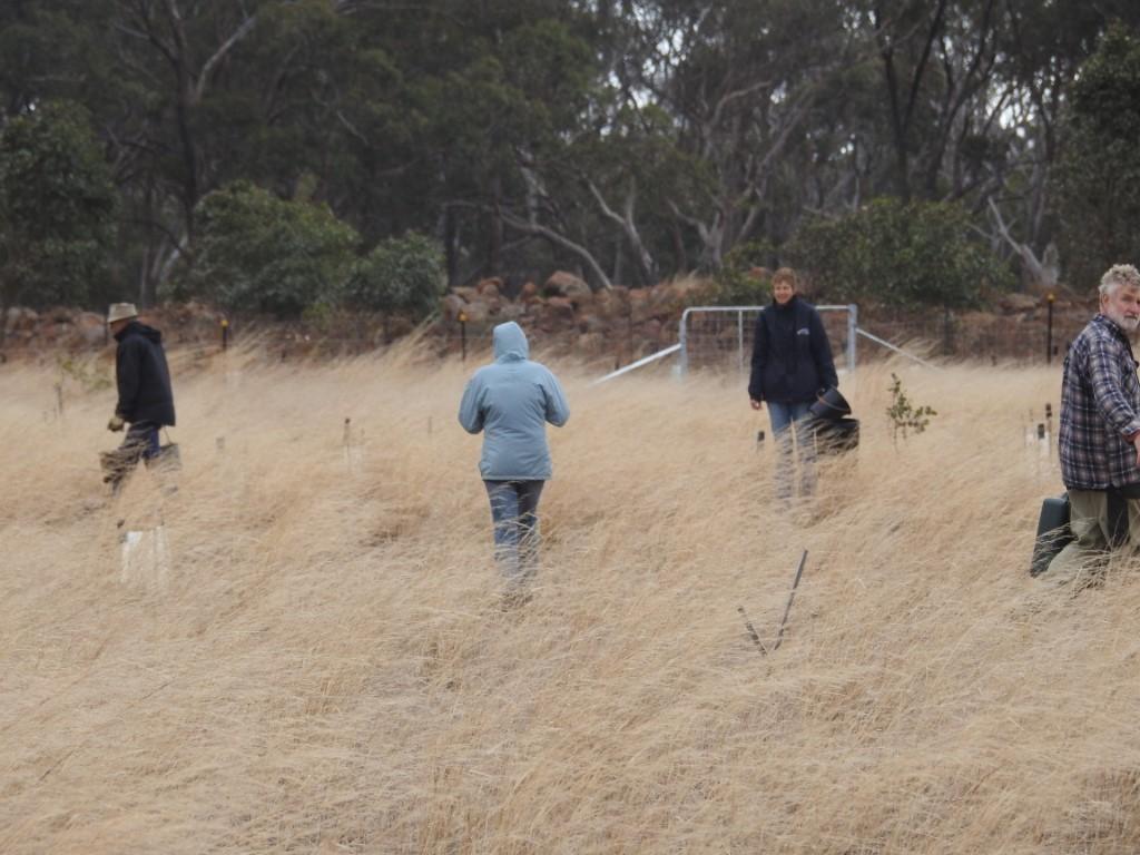 Volunteers watering in Pinkrton Link