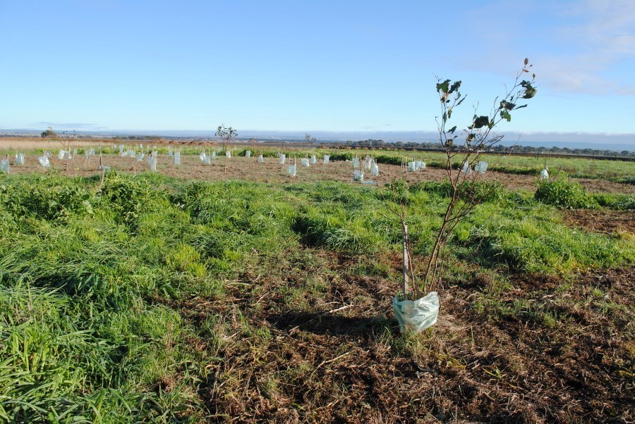 2014 View west, more weed problems and insect predation