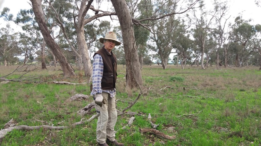 Irene weeding in Pinkerton Forest