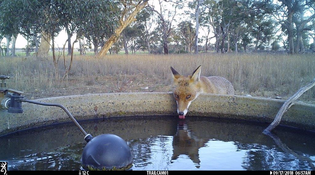 fox-pinkerton.jpg