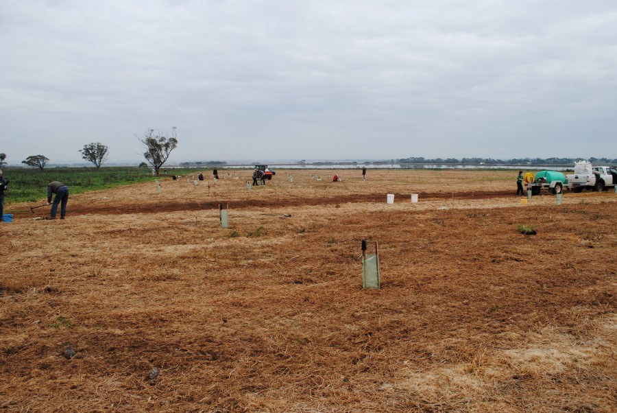 2011 View west, planting in the high nutrient area