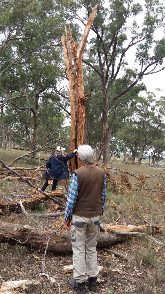 Rosemary  Irene with tree lighting strike 8 feb 2020